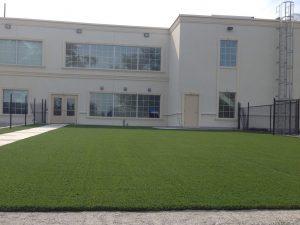arti-grass